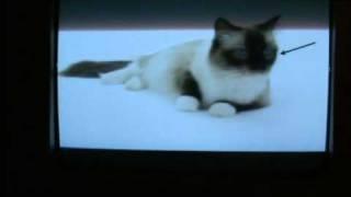 Cats 101 Ragdoll Animal Planet - česky