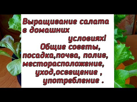 Вопрос: Как вырастить дома салат в маленьких стаканчиках, как в магазине?