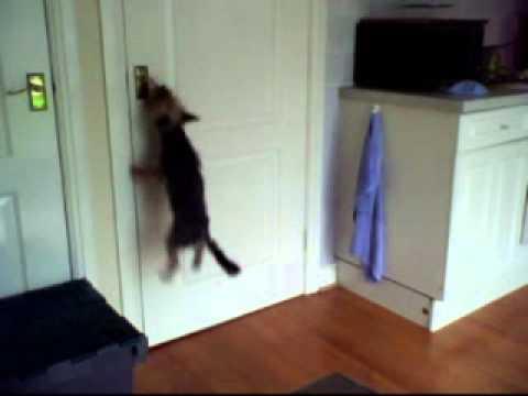 rascal escapes the kitchen