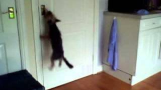 Repeat youtube video rascal escapes the kitchen