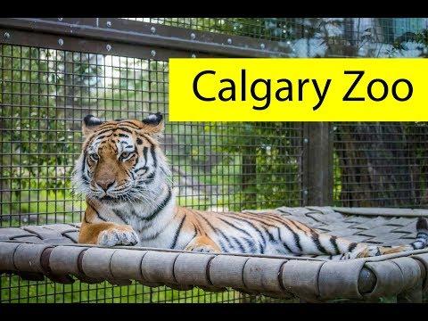 Calgary Zoo Visit - June 2019
