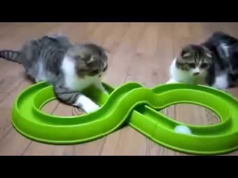 Смешные котята (76 фото) - Приколы