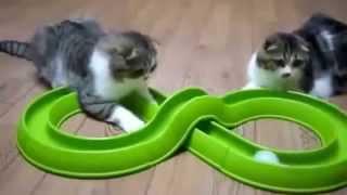 Смешные кошки и котята. Лучшее видео 2014. Уморительные и веселые моменты.