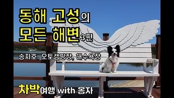 동해 고성의 모든 해변 3편 – 송지호, 송지호 오토캠핑장, 송지호 해수욕장
