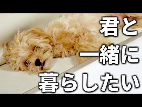 【保護犬】君と一緒に暮らしたい。ペットの命の重さを感じた1日(保健所 捨て犬 里犬 保護犬 募金活動)【しほりみチャンネル】