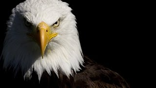 "The Eagles ""Lyin"