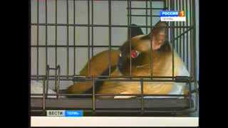 В Перми появился уникальный томограф для животных