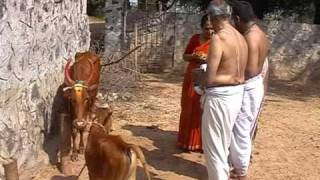 Go Puja Cow Worship