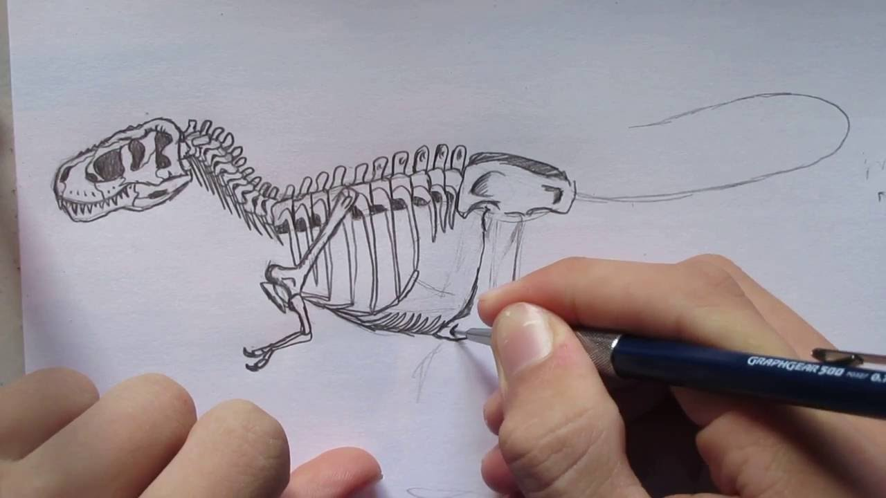 How To Draw A T Rex Skeleton Danny The Dinosaur Drawer Youtube