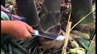 ไผ่ตงลืมแล้ง สวนไผ่ทองสุข ลพบุรี 2