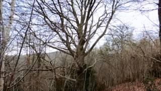 Vulpe Rando Bivouac Normandie - Le Hêtre