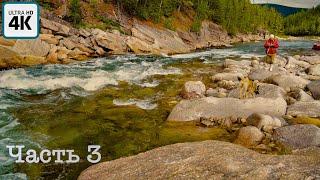 Путешествие о котором мечтает каждый рыбак (ч. 3) | Встреча с медведем, ловим хариуса, горная река