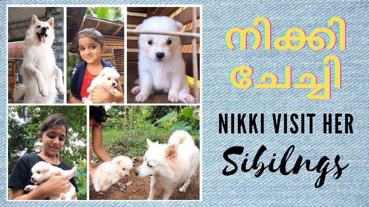 നിക്കിയുടെ അനിയനെ തട്ടികൊണ്ട് വന്നു🤣 | NIKKI visit her Siblings | നിക്കിയുടെ അനിയന്മാരും അനിയത്തിയും