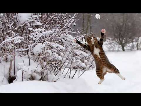 The Best Of  Images of Cats Jumping 2019
