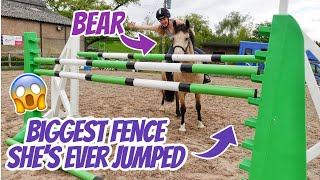 BEAR'S LAST JUMP ~ The biggest my pony has EVER jumped