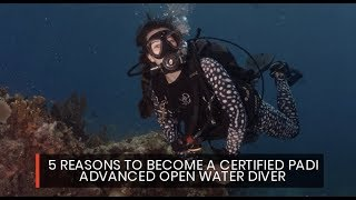 Your diving adventures continue...  Whether you have just be image