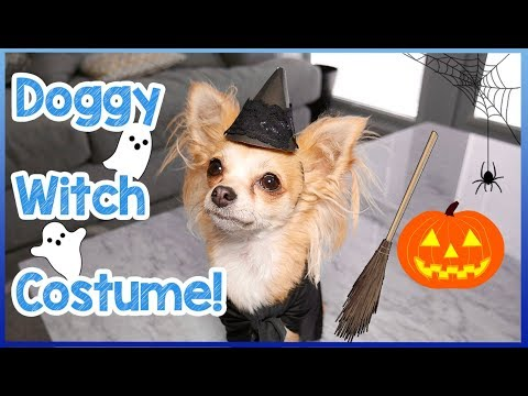 How To Make A Halloween Witch Costume For Dogs | Easy DIY Doggy Witch Costume For Halloween! 🎃🐶👻
