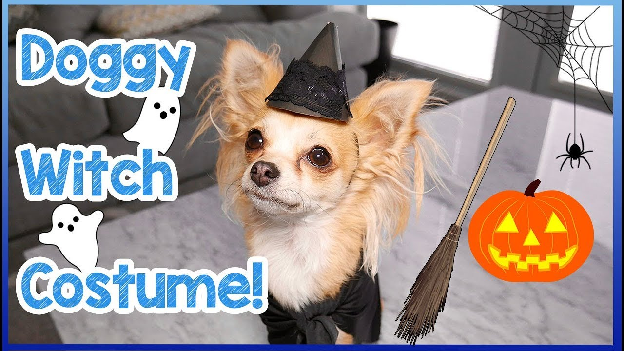 How To Make A Halloween Witch Costume For Dogs   Easy DIY ...