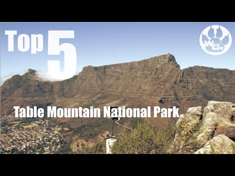 Top 5 Must Sees in Table Mountain National Park | theWildLife