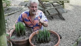 Hostas in the Exotic Garden - Will Giles