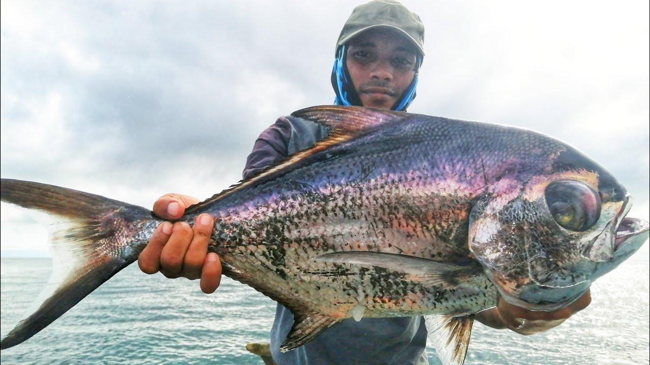 Isdang Tabas or Pomfret Fish  Ariya