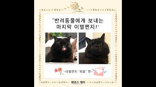 """김해부산 애완묘장례식 펫로스케어 이별편지 """"레…"""