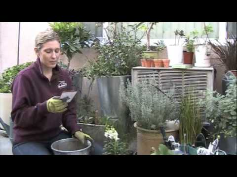 Vlog 3 review of p allen smith 39 s container gardening deck youtube - P allen smith container gardens ...