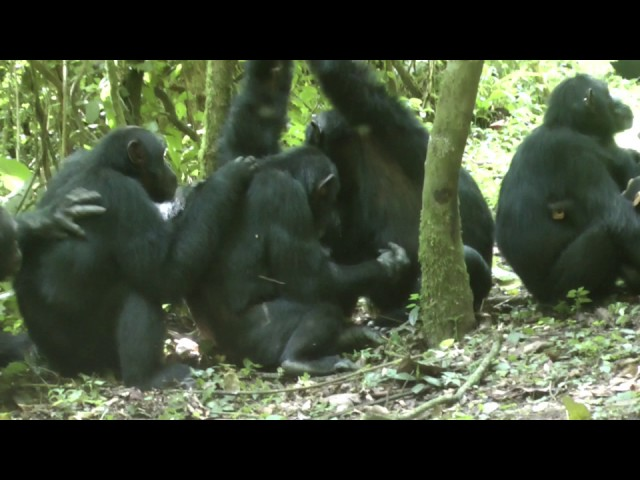 Grooming time on the path in Sonso