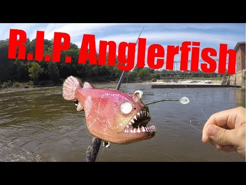 Fishing With An Anglerfish Lure