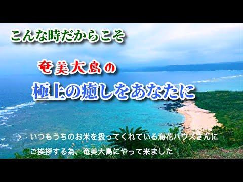 【擬似旅行体験!奄美大島で心の洗濯いかがですか?】最高の癒しをあなたに。