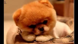 Красивые животные (собаки)