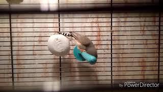 Что должно быть в клетке попугая/амадины?