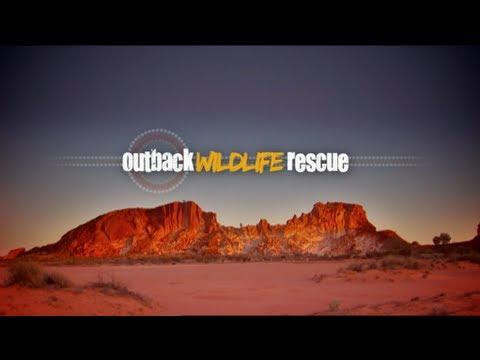 Outback Wildlife Rescue Episode 6