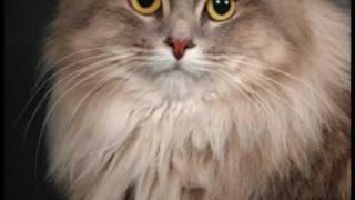 Тёплые коты.wmv