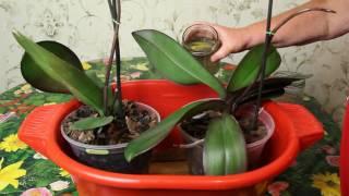 видео Как организовать полив цветов на время отпуска своими руками?