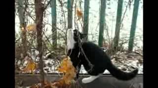 Кошка, которая гуляет сама по себе - Машина Времени