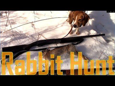 Rabbit Hunting  Beagle / 410