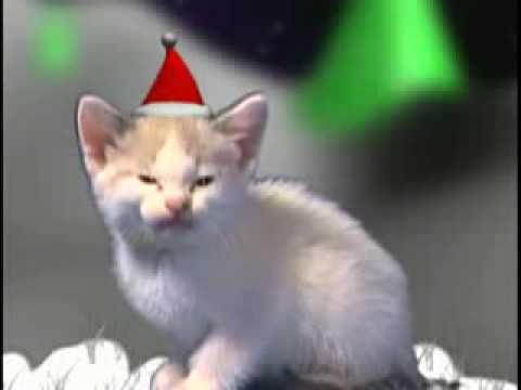 Christmas cats chanson de noël avec chat
