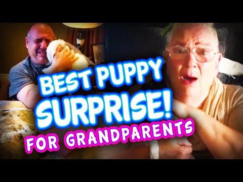 Best Puppy Surprise for Grandparents & Elderly Compilation | Get the tissues | Surprise Puppy React!