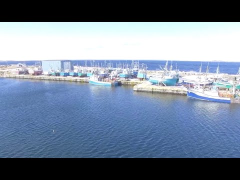 A Few Videos Around Musgrave Harbour
