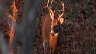 Deer Hunt/Code Blue Review Respect Outdoors Pro-Staff Adam Johnson