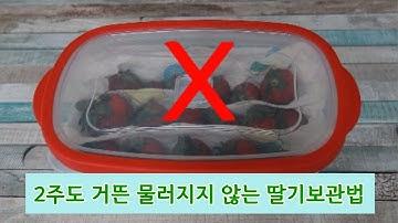 2주 싱싱 딸기 보관법 상하고 물러지지 않는 냉장보관법 실험