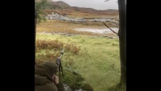 Mobile phone footage from a stalking party showing stag being shot while swimming. some people may find the images upsetting. more on this story: https://t...