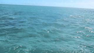 West End Ecology Tours - Dolphin Watch @ Sandy Cay, West End, Grand Bahama Island