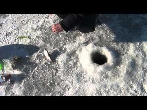 Зимняя рыбалка на Рузском водохранилище самоклев видео