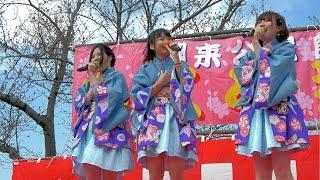 2017/04/02 かしま未来りーな@水郷潮来桜まつり 前川あやめ園