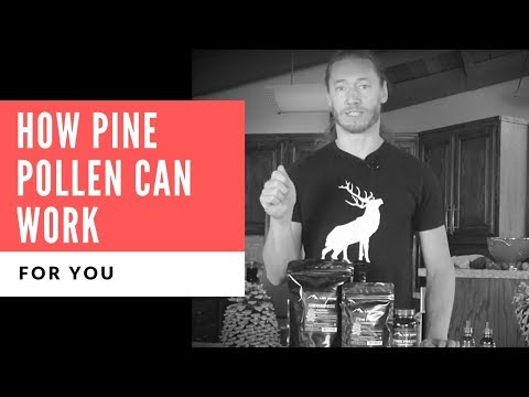 how-pine-pollen-can-work-for-you