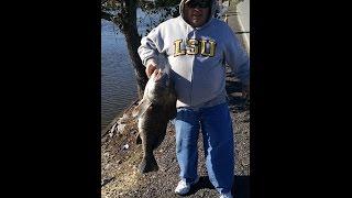 Shell Beach Black Drum Fishing 2015 near the draw bridge