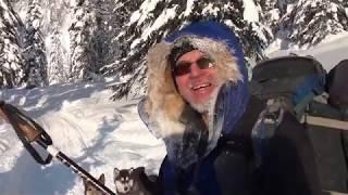 Лыжи. Поход зимний. Две ездовые собаки  мороз -30 Скитур, скиджоринг, хаски..