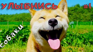 Смешные видео с собаками Море позитива Ржачные животные Улыбнись 1